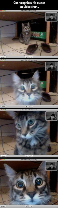 This geeky cat finally recognized its owner on video chat, and this reaction ensued.