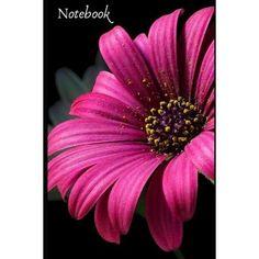 Pink Daisy Wallpaper, Plant Wallpaper, Screen Wallpaper, Wallpaper Backgrounds, Romantic Gestures, Garden Park, Live Wallpapers, Nature Pictures, Daffodils