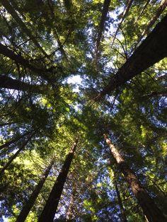 Redwood Forest, Warburton. Victoria, Australia.