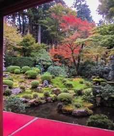#kyoto #京都 #三千院 #sanzenin #japanesegarden How can you feel when sitting down on the corridor and facing the front scene? #naturephotography #japan #relaxing #garden #art #travelexperience #kyototrip #japantravel