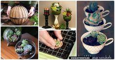 Interior Design with Succulent Garden Planter Designs and Display Ideas