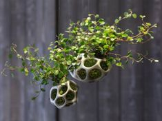 Landscape design company ecoid have created CELLA, a product designed to house moss and other small plants.