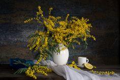 1384988624-mimoza-12.jpg (1830×1220)