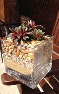 hidden pot so succulents look planted in rocks or sand