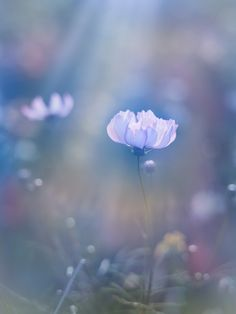 Raindrops and Roses: Photo Exotic Flowers, Small Flowers, Wild Flowers, Beautiful Flowers, Beautiful Pictures, Spring Flowers, Raindrops And Roses, Stay Wild Moon Child, Glorious Days