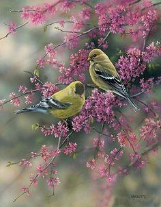 Pajaritos en primavera