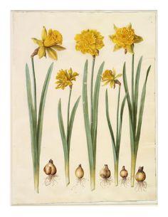 Flowers I Gottorfer Codex