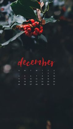 Enjoy this free December 2016 calendar wallpaper available for download for your desktop or iPhone or iPad! Christmas is coming! Bring on the holiday cheer!