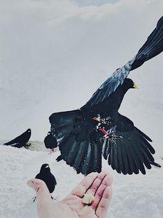 By me Bird, Iphone, Photos, Animals, Pictures, Animales, Animaux, Birds, Animal