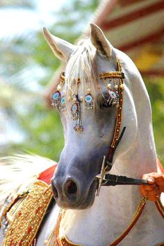"""Now THIS is """"Horse Jewelry""""!!!   Cool!!!"""