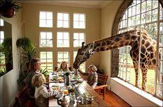 Giraffe Manor Hotel, Nairobi, Kenya