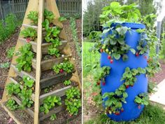 Exemples de fontaines à fraises - Photos : Chesapeakecrafts.co & Mapassionduverger.fr Permaculture, Green Garden, Projects To Try, Plants, Diy, Photos, Gardening, Tires Ideas, Qi Gong
