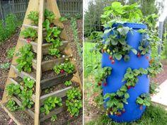 Exemples de fontaines à fraises - Photos : Chesapeakecrafts.co & Mapassionduverger.fr