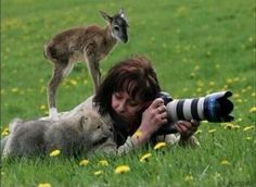 A photographer gets approached by a baby deer AND a baby wolf while out in the field.