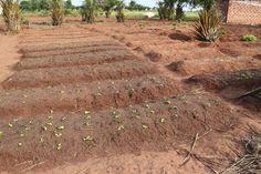 Spinach sprouts in #Benin community veg. garden #WFD2013 #farmpic #AgriChatWorld