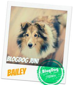 Hunde sind der Treibstoff vieler Hundeblogs, inspirieren & motivieren. Daher hat der Fiffibene Hundeblog den BlogDog Award eingeführt. Bewerbt euch jetzt!