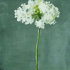 Hilda Oomen Queen Anne's Lace....Today's posts come from online art markets and artist sites where the price is clearly stated (how rare this is!), along with other important details, including format, size and how to buy the work. Most of these originals and prints cost less than $300—a few, much less. If I can make art-buying a little easier and more transparent for followers of slqh, my mission is accomplished.