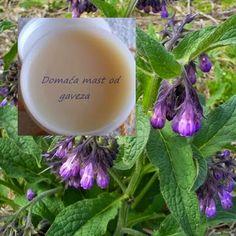 Recept za gavezovu mast s maslinovim uljem ~ Prirodni lijek