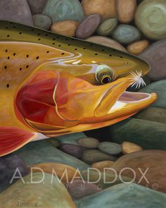 Golden Catch. This one was a bit sassy to paint lol #goldentrout #admaddoxprints www.admaddox.com