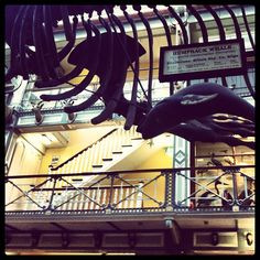 Natural History Museum of Dublin also a gorgeous way to experience of Victorian Architecture - Photo by elishbulgodley