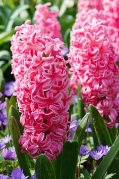 Hyacinth...no wonder the bees swarm them...they smell delicious!!