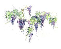 Red Wine Grape Vines