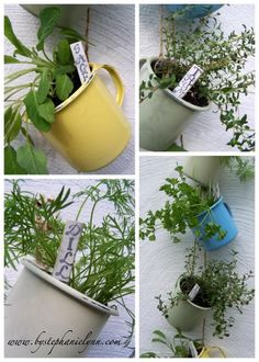 Under The Table and Dreaming: Hanging Coffee Cup Herb Garden; website has great ideas Gardening Websites, Gardening Tips, Herb Garden Pallet, Hanging Herbs, Victory Garden, Mets, Edible Garden, Garden Inspiration, Garden Plants