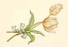 Vintage flower illustration from 'Language of Flowers' – Illustrated by Kate Greenaway http://www.amazon.com/gp/product/1445508702/ref=as_li_tl?ie=UTF8&camp=1789&creative=9325&creativeASIN=1445508702&linkCode=as2&tag=reaboo09-20&linkId=N2A7WM2E2LSKLQMF