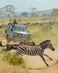 Run with the wild in Tanzania, literally.