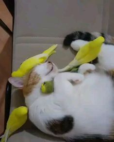 🐈 Are your cats friends with other animals? 🐦🐕🐀 - Informationen zu 🐈 Are your cats friends with other animals? 🐦🐕🐀 Pin Sie können mein P - Funny Cute Cats, Cute Baby Cats, Funny Birds, Cute Birds, Cute Cats And Kittens, Cute Funny Animals, Cute Baby Animals, I Love Cats, Cute Bunny