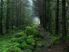Typical mossy woods in Ireland. We walked through some beautiful woods like this near Muckross House in County Kerry.