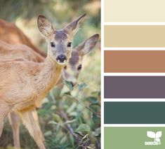 color deer