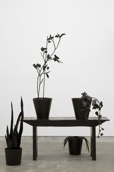 black plants and pots