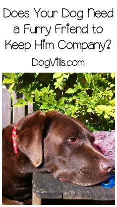 What Kind of Pet Should I Get to Keep My Dog Company? Thinking about getting a second pet to keep your dog busy? Check out these dog training tips first before you head out to adopt! What Kind Of Dog, Dog Health Care, Health Tips, Aggressive Dog, Dog Training Tips, Training Videos, Potty Training, Dog Behavior, Shelter Dogs