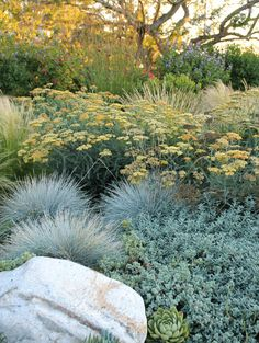 The following five drought-tolerant landscaping ideas look fresh and modern enough for any garden regardless of whether water is an issue or not.