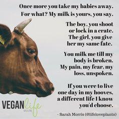 Slogans About Cruelty Against Animals - Modern Home Revolution