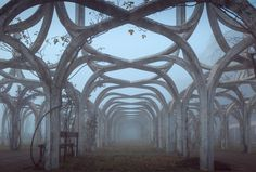 No Roses - Cool shapes and patterns in an decaying and abandoned rose garden on a foggy day in December.