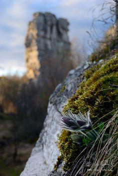 Slovakia - V tejto galérii ponúkam pohľad na svet pod našími nohami, nad našími hlavami, na krásy, ktoré míňame na prechádzke lesom ale aj mestom. Rastliny, huby, hmyz, Szvieratá, vtáky, skaly či voda na fotografiách.