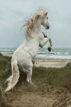 White horses not just in the sea but on the beach Pretty Horses, Horse Love, Beautiful Horses, Animals Beautiful, Beautiful Images, Majestic Horse, Majestic Animals, Horse Photos, Horse Pictures