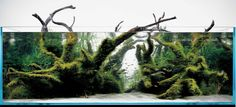 Mizube is an aquascaping style where the branches of driftwood extend above the waterline and out of the tank.