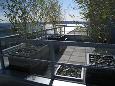 schwarze Kiessteine im Pflanzbeet für gut drainierten Boden
