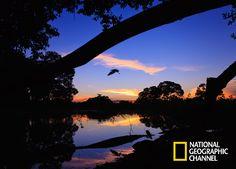 As maravilhas da natureza selvagem do coração da América do Sul. Brasil Secreto, Pantanal.  #NatGeo   Confira conteúdo exclusivo no www.foxplay.com