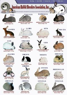 A few different bunny breeds.
