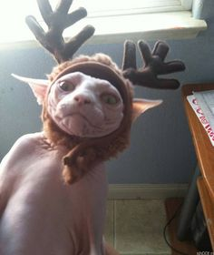 Funny pictures about Dobby Is A Free Elf Now. Oh, and cool pics about Dobby Is A Free Elf Now. Also, Dobby Is A Free Elf Now photos. Humour Harry Potter, Wtf Funny, Funny Cute, Freaking Hilarious, Funny Gifs, Funny Humor, Funny Videos, Funny Images, Funny Stuff