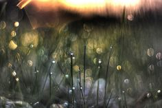 Say you will by MightyBoyBrian, via Flickr