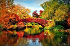New York U.S.A. Pound Tress  Color awesome picture In Mood For Fall by Venera Varbanova on 500px
