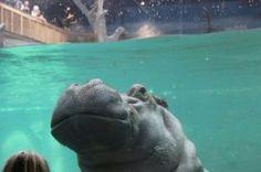 Adventure Aquarium, Camden, NJ - Accessible Travel Reviews