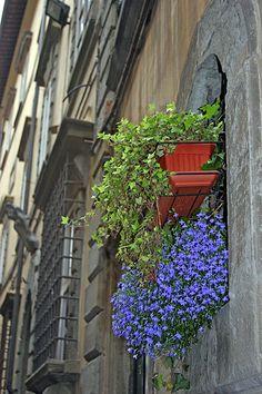 Tuscan window box #TuscanyAgriturismoGiratola