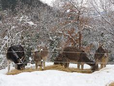 Winter 2012 feeding with snow