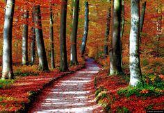 """© Blende, Helmut Büchner, Herbstwald, Thema: """"Naturschönheiten""""  #Herbst #Laub #Wald"""